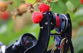 这个采摘水果的万博体育登录网页版,手速比农民快多了